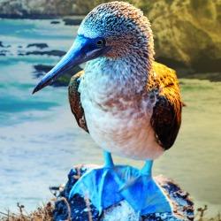 Galapagosz-szigetek úticél hajóút
