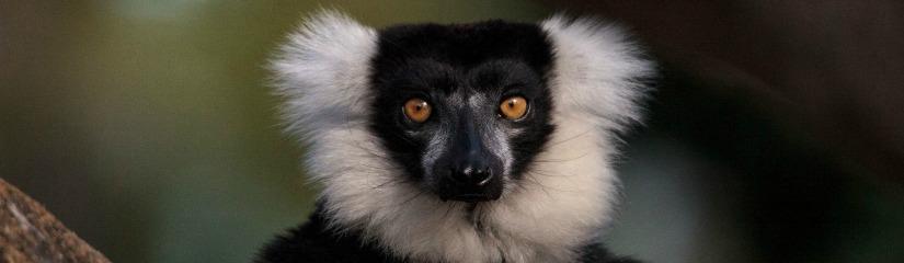 Különleges állatok a déli féltekén
